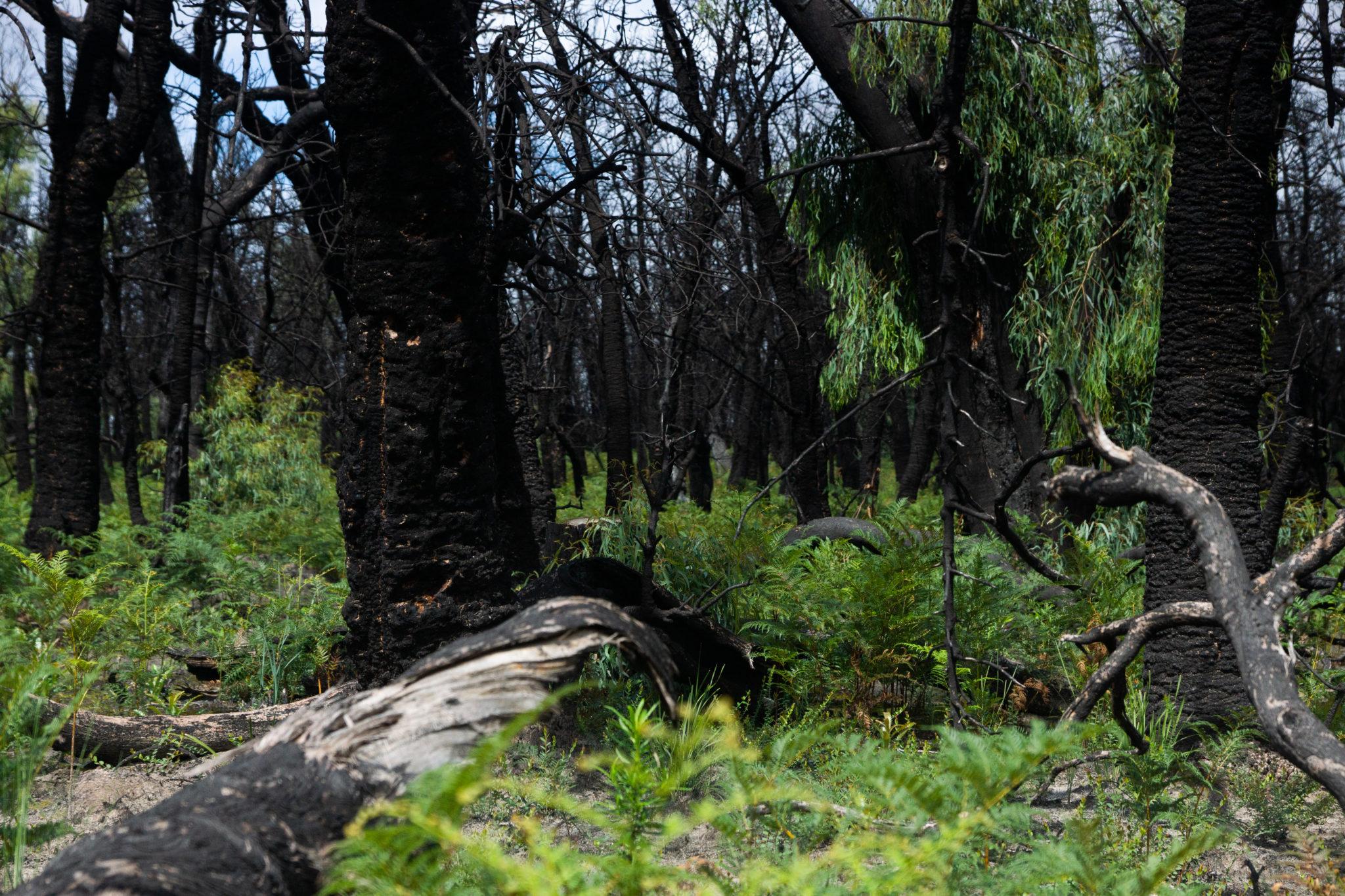 Refuge from Bushfires