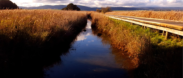 Tamar River Wetlands