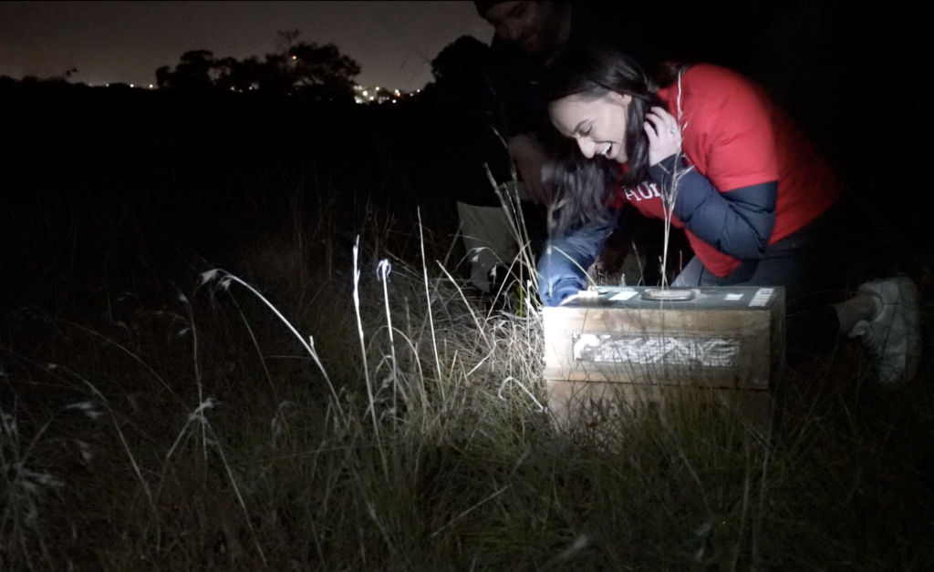 Releasing Bandicoots in Victoria with Aon Corporate Social Responsibility