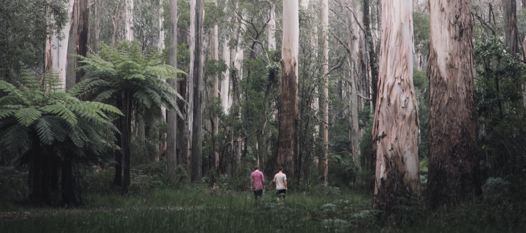 Men in Dandenong Ranges Forest