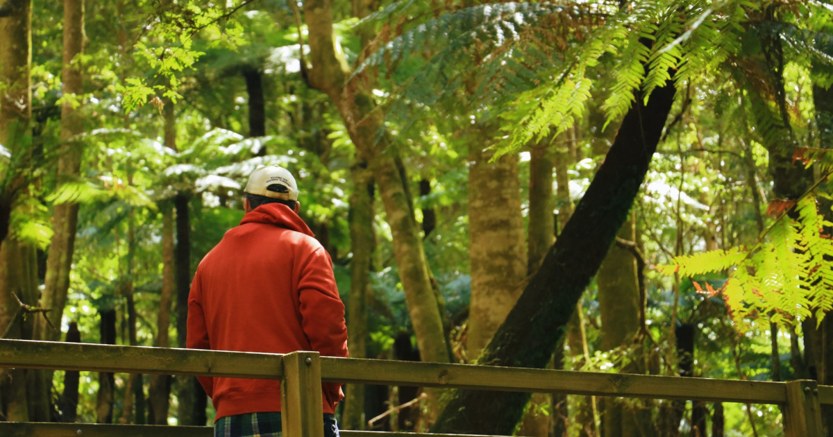 Nature and Human Wellbeing - Nature Immersion